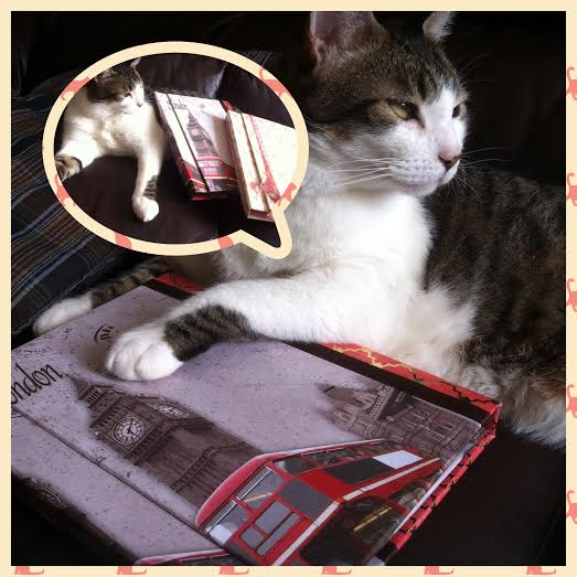 Ele gosta de scrapbook, meu Fred arteiro!